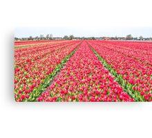 Dutch Tulips part 7 Canvas Print