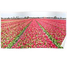 Dutch Tulips part 7 Poster