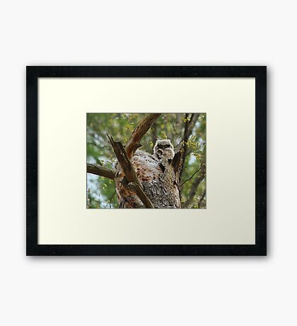 Great horned; the next generation Framed Print