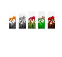 Dutch Tulips part 9 by AlexFHiemstra