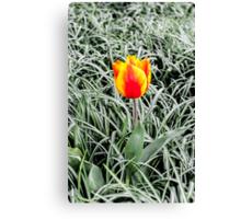 Dutch Tulips part 10 Canvas Print