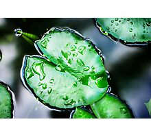 Lotus leaves with water drops Photographic Print