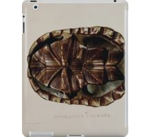Tortoises terrapins and turtles drawn from life by James de Carle Sowerby and Edward Lear 051 iPad Case/Skin