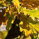 Autumnal Shades  by Rob Hawkins