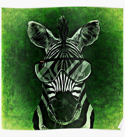 Cool Zebra Poster