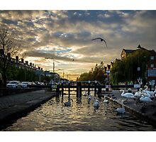 Swans on the Grand Canal Photographic Print