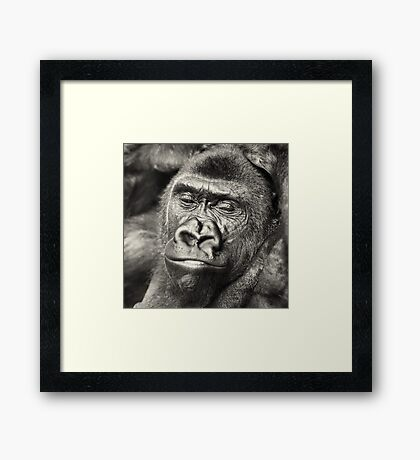 Black Gorilla Portrait Framed Print