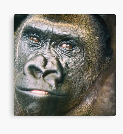Black Gorilla Portrait Canvas Print