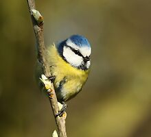 Puff Ball by CBoyle