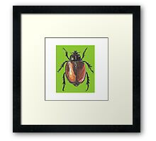 Insect drawing Framed Print