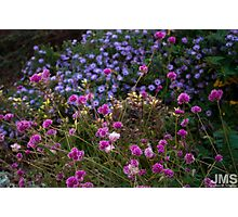 Flowers of Fort Tryon Park Photographic Print