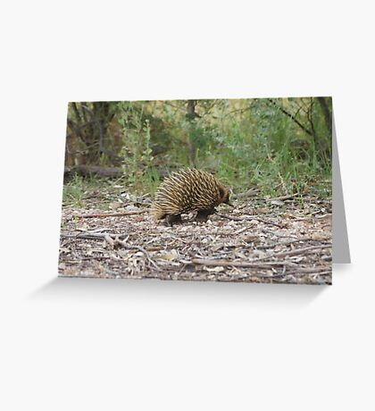 Spike Greeting Card