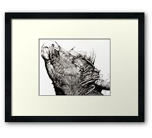 Highland Bull Framed Print
