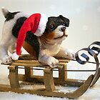 Puppy on a Sled by FrankieCat