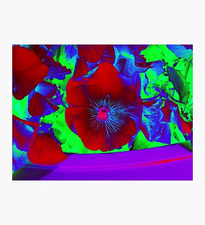 Bold Bluesy Blooms Abstract Photographic Print