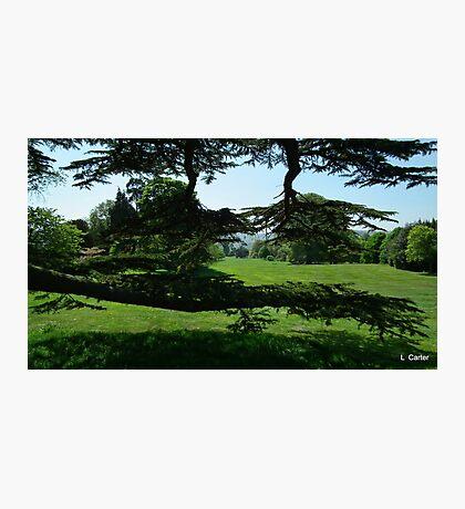 England,s Greenery Photographic Print