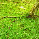 Kyoto Greens by Sue Ballyn