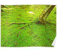 Kyoto Greens Poster