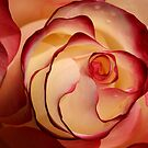 Rose Garden 15-15 by beeden