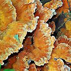 Chicken of the Woods by debidabble