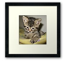 sweetness & light Framed Print