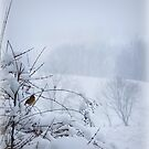Female Cardinal in the Snow by TrendleEllwood