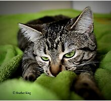 Fascination with Greenie Photographic Print