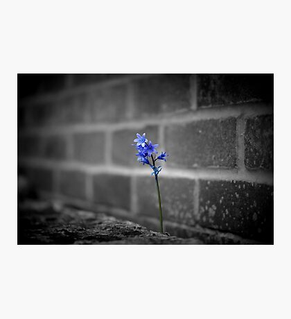 Nature Prevailing Photographic Print