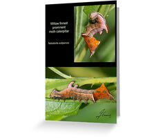Willow Finned Prominent moth caterpillar Greeting Card
