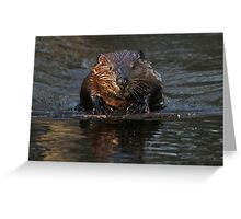 A beaver's floatation device Greeting Card