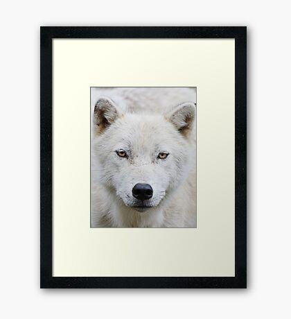 Wisdom becomes me Framed Print