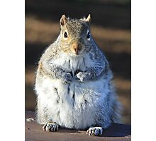 I'm not fat I'm insulating for the winter Photographic Print