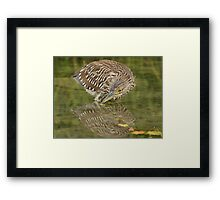 Timid reflection Framed Print