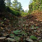 Leafy Path by Richard Winskill