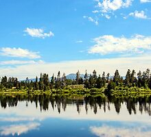 Natures mirror by Karol Franks