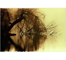 brown eyetree Photographic Print