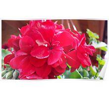 flowers vegetable spring garden Poster