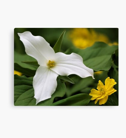 White Trillium and Yellow Anemone Canvas Print