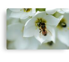 Just 'beeing' around Canvas Print
