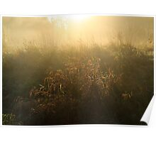 Mist on Crown Meadow Poster