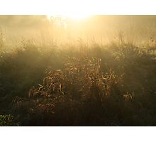 Mist on Crown Meadow Photographic Print