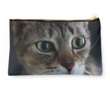 Transfixed Abyssinian  Studio Pouch