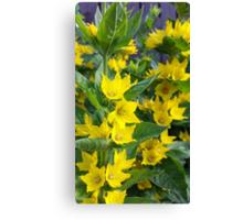 flowers vegetable spring garden Canvas Print