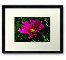 Fractal Flower 1 Framed Print