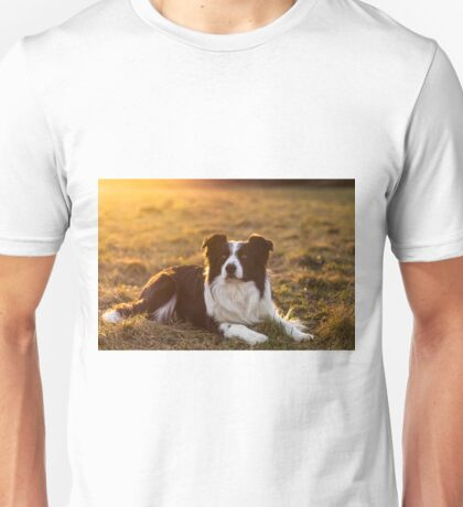 border collie at sunset Unisex T-Shirt