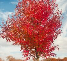 Single Lone Autumn Tree Sticker