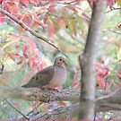 Mourning Dove in the Sour Wood Tree by TrendleEllwood