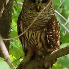 Did I Find the Owl or Did the Owl Find Me? by TrendleEllwood