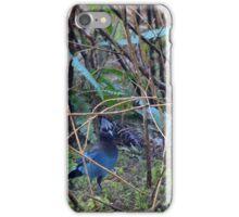 Forest Stellar Jay iPhone Case/Skin