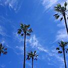 Summer Palms by Steve Giddings